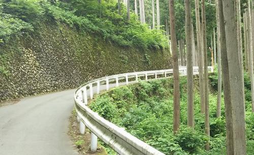 20160619風張林道03