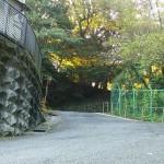 百草園の坂