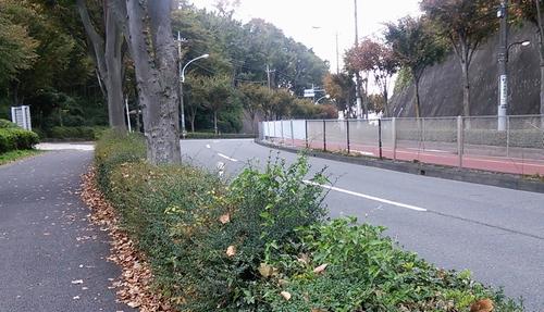 06野猿峠_東-2