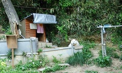 20150506-源流坂04犬